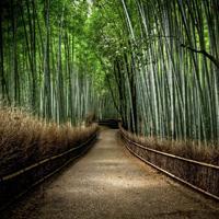 BambooForest3